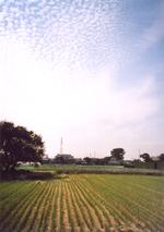 Akinokumo