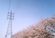 2010sakura2